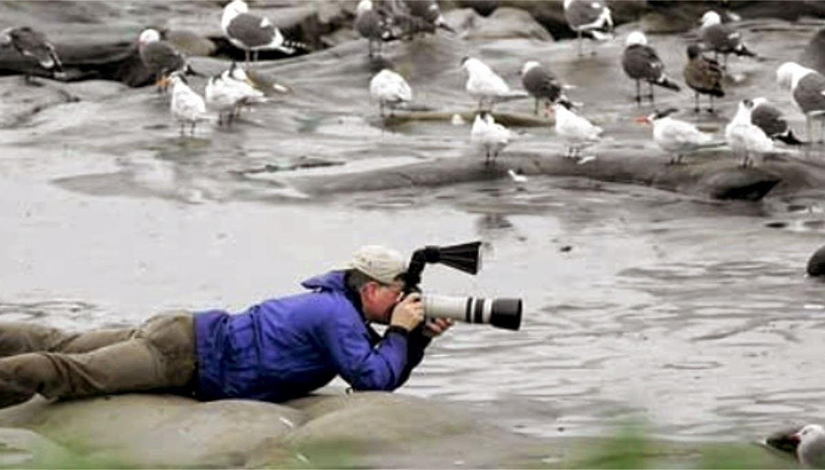 photographing birds, bird photography