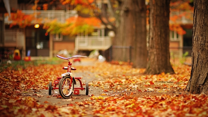 Tricycle Autumn wallpaper