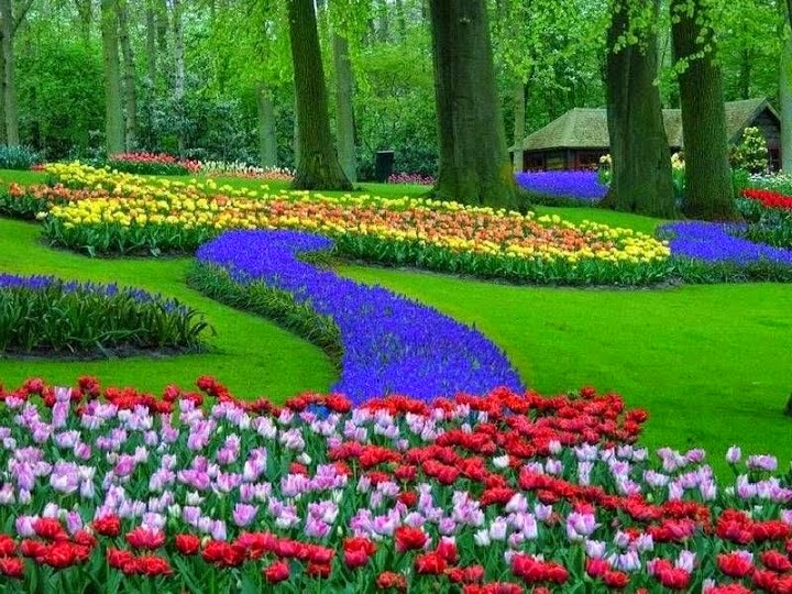 Borboleta brilhante imagens diversas paisagens lindas for Jardines verticales historia