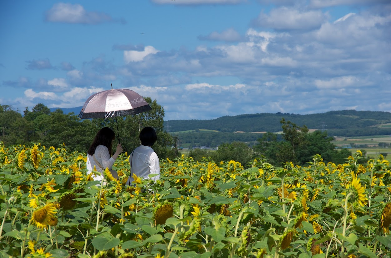 ひなわり畑の愛愛傘