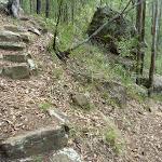 Rock steps in Palm Grove NR (369838)