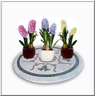 Algo de plantas jacinto hyacinthus spp - Jacinto planta cuidados ...