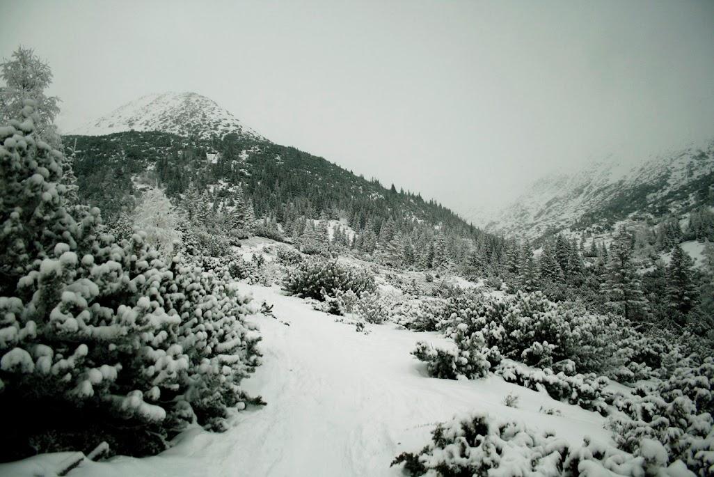 Dolina Żarska zima
