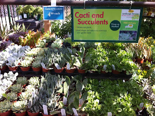 Succulent Section At Armstrong Garden Centers