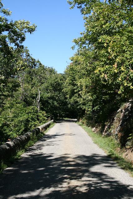 Route ombragée près d'Aizac