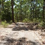 Trail through forest in Blackbutt Reserve (401284)
