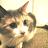 Leesy England avatar image