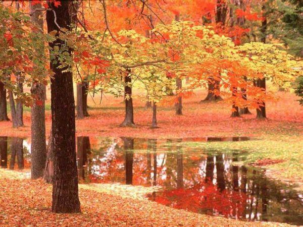 Chùm thơ 5 chữ rất hay về mùa Thu