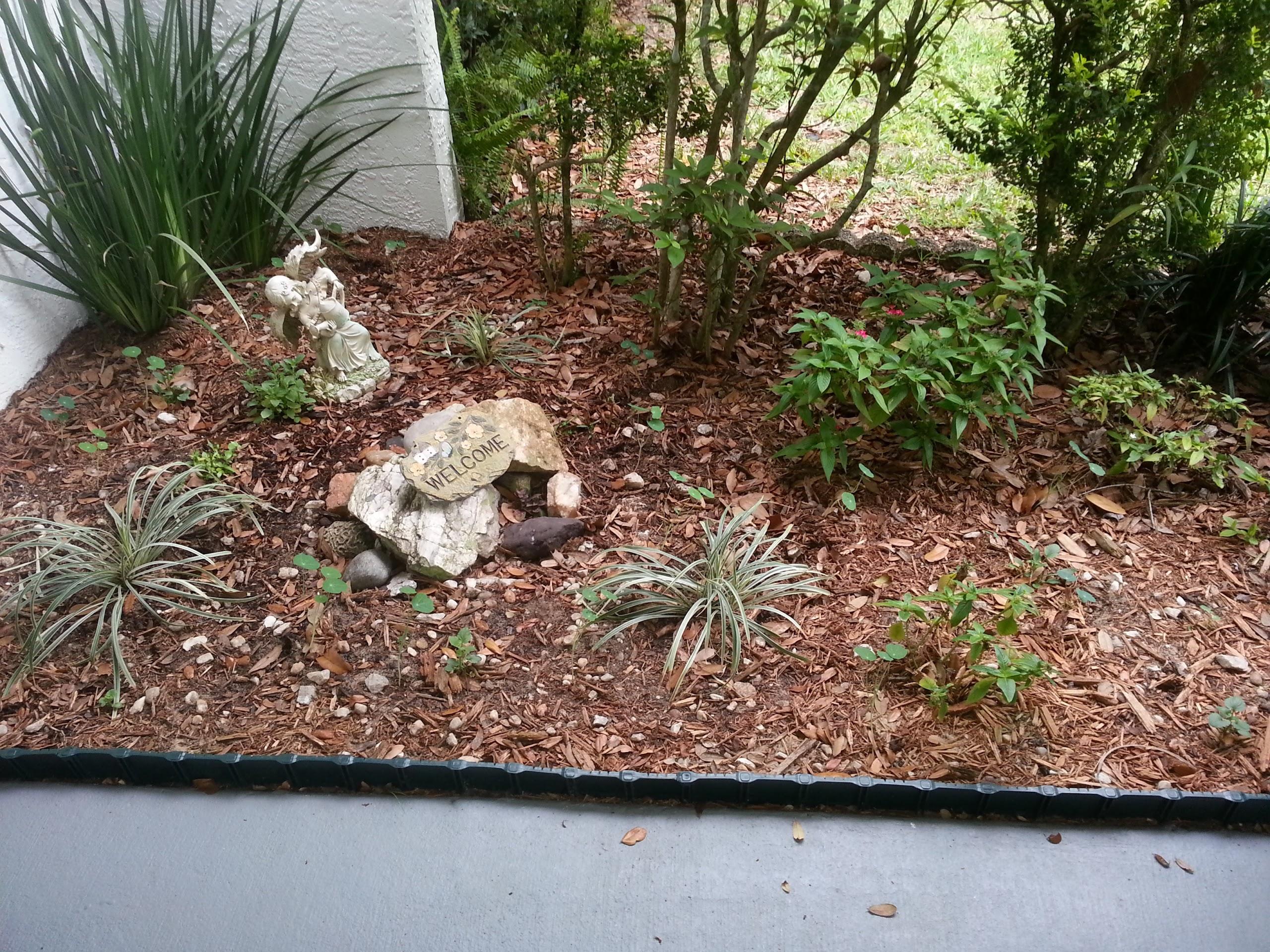 My garden and Aerogardens: Garden News, 2nd edition
