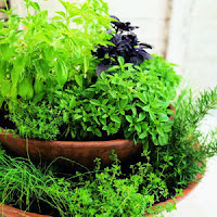 Herb Indoor Gardening Tips Image