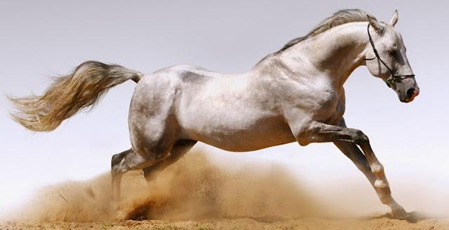 Chuyện tiền thân năm ngựa: Ngựa nòi thông minh