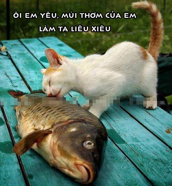 Ảnh chế vui mèo ăn cá