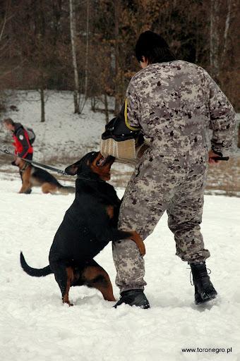 pies obronny duży uścisk