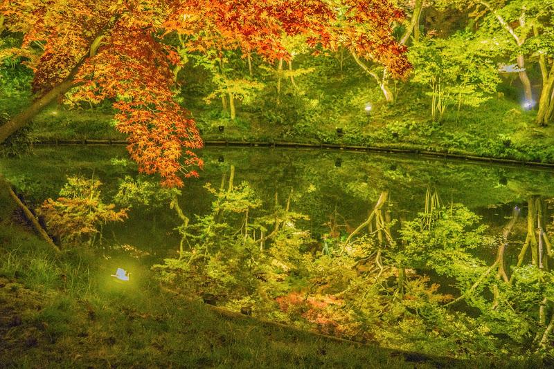 京都 高台寺 紅葉 ライトアップ 写真6