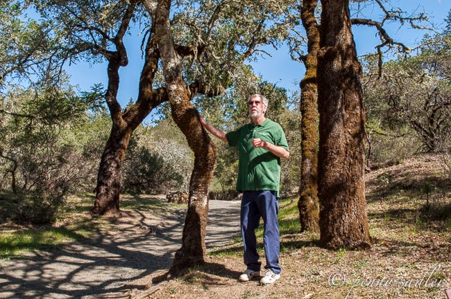 Learning about Calistoga's Petrified Forest with Naturalist David Storck