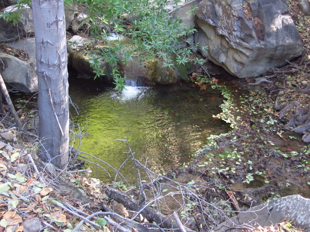 leaf ringed pool along the creek