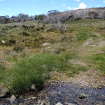 Crossing the creek (97279)