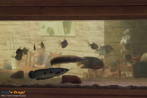 Tuchlino Park Egzotycznych Zwierzaków - egzotyczne gatunki ryb