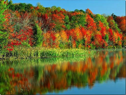 Morning Light, Horseshoe Lake, Adirondack Park and Preserve, New York.jpg