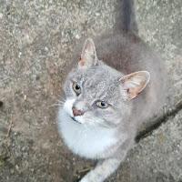 Lamarr TD's avatar