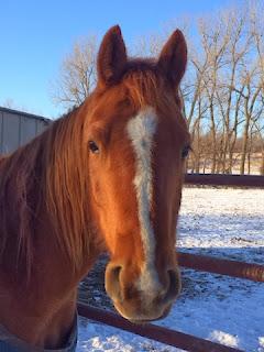 Congress Cuts Horse Slaughter Funding... Again