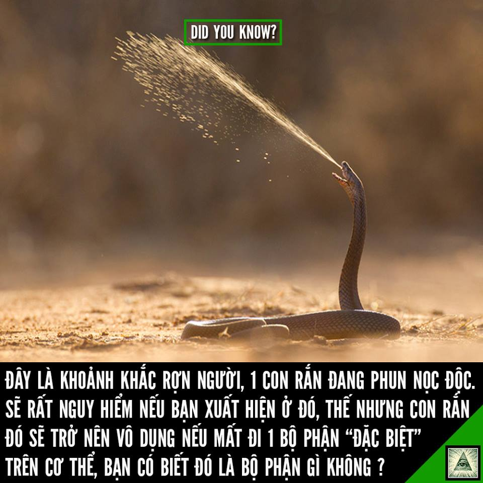ran-se-tro-nen-vo-dung-neu-mat-di-1-bo-phan-dac-biet-nay-tren-co-the