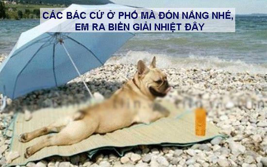 ảnh chế chú chó đi biển giải nhiệt mùa hè