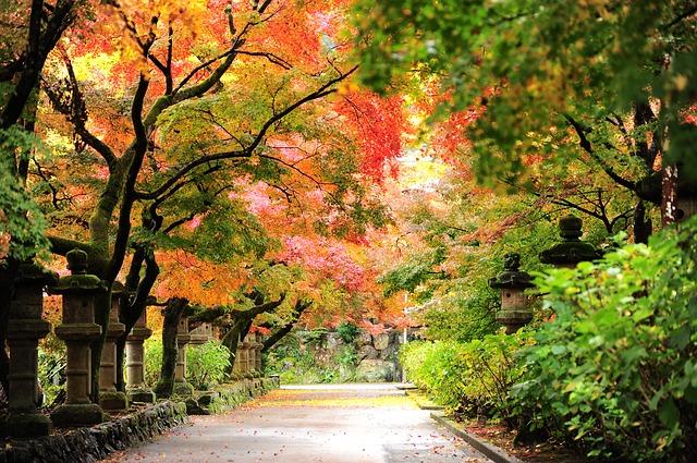 cảnh đẹp mùa thu