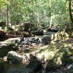 Bobbin Head Rainforest (118789)