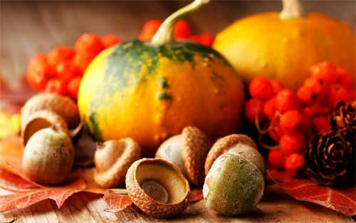free thanksgiving wallpaper-pumpkins and berries