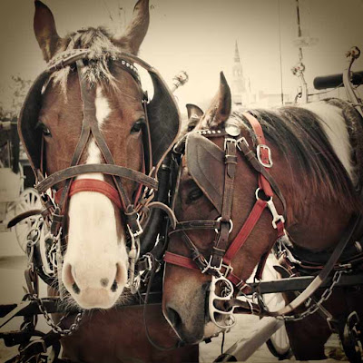 Horses in Charleston by SweeterThanSweets