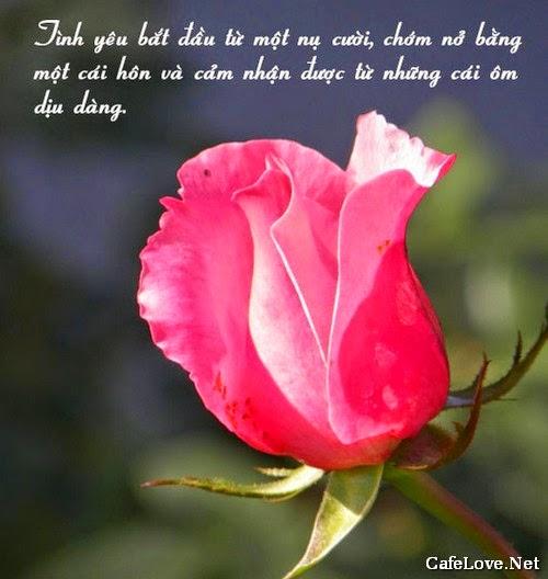 Ảnh hoa đẹp và câu nói tình yêu là gì