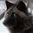 Harl Windwolf avatar image
