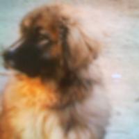 Foto del profilo di GIUSEPPE ALESSI