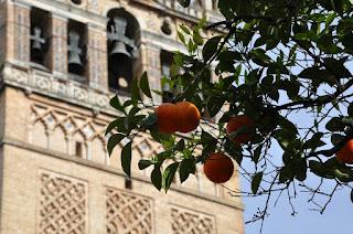 Séville: patio des orangers, cathédrale