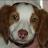 Ralph Letizia Jr. avatar image