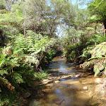 The Kedumba River (92233)