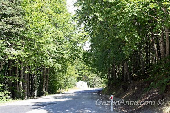 Bursa, Uludağ Milli Parkı'nda Uludağ'ın tepesine çıkarken