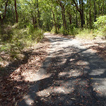 Wide forested trail in Blackbutt Reserve (401320)