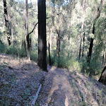 Track near Erskine Creek (144006)