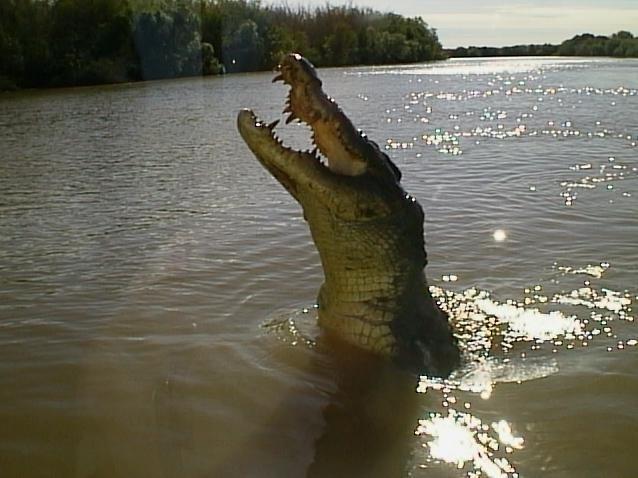 Крокодилы в Какаду