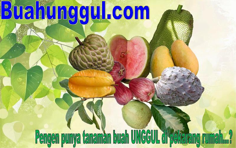 buah unggul
