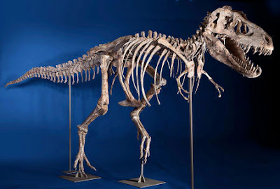 Mongolia wants sale of T-Rex skeleton halted
