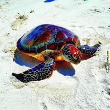 Image result for colourful sea turtles
