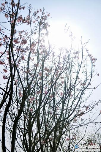 芬園花卉生產休憩園區 - 陽光依然燦爛