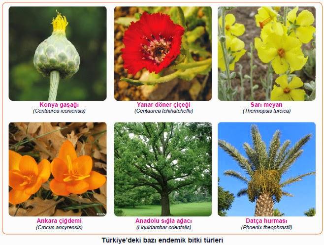 endemik bitki türleri