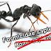 Proč mravenci přežijí lidskou civilizaci - online dokument /AJ/