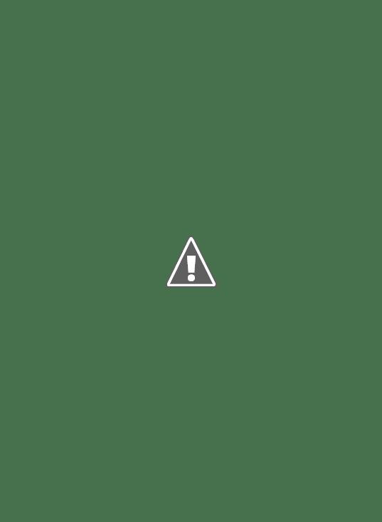 tulipán levél