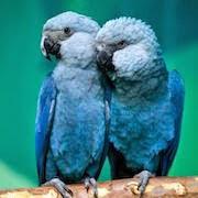 к чему снятся птицы в доме?