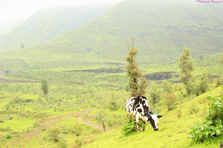 Igatpuri - A Magical place for pure Bliss 7